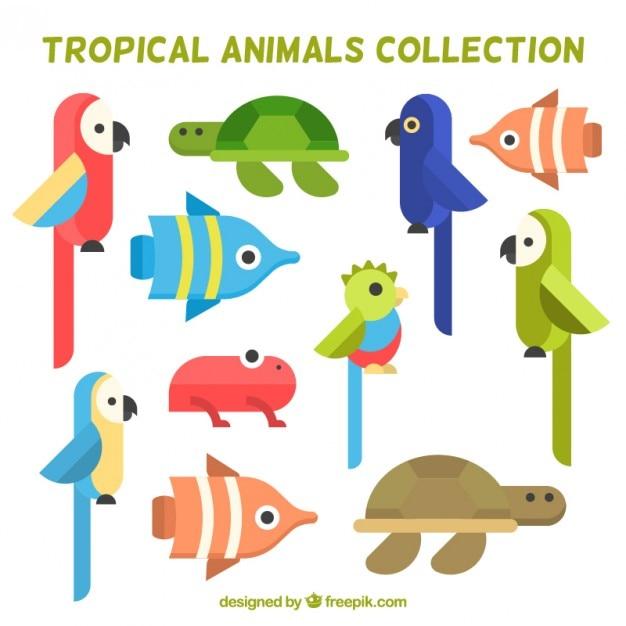 Verzameling van platte vogels en tropische dieren Gratis Vector