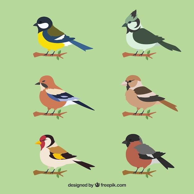 Verzameling van platte vogels Gratis Vector