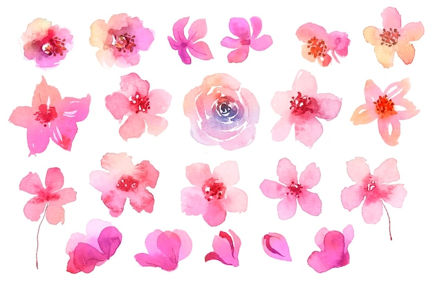 Verzameling van roze bloemen in aquarel Gratis Vector
