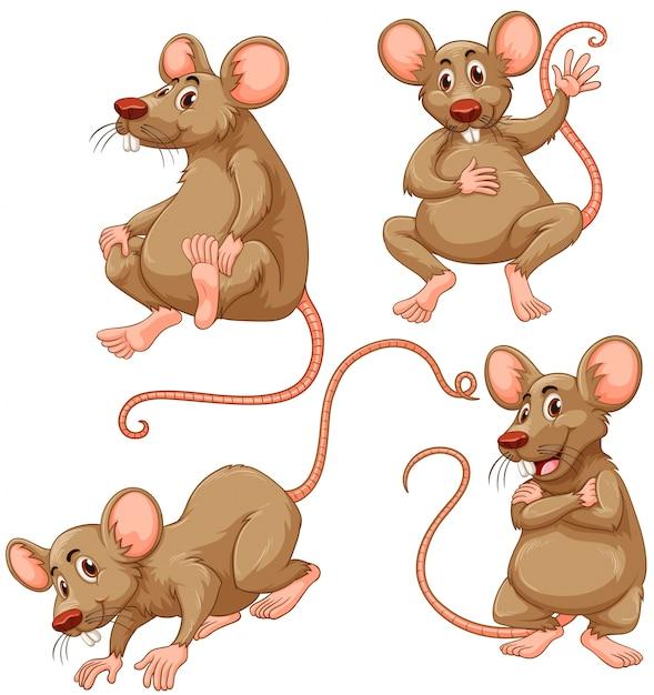 Vier bruine muis op witte achtergrond illustratie Gratis Vector