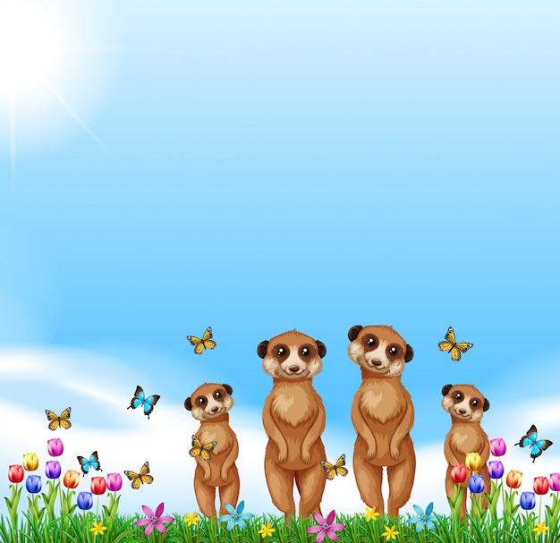 Vier meerkats die zich in het gebied bevinden Gratis Vector