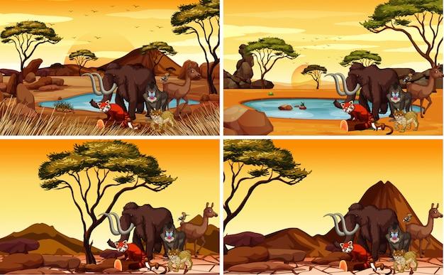 Vier savannescènes met veel dieren Gratis Vector