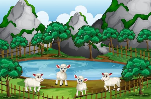 Vier schapen bij de vijver Premium Vector