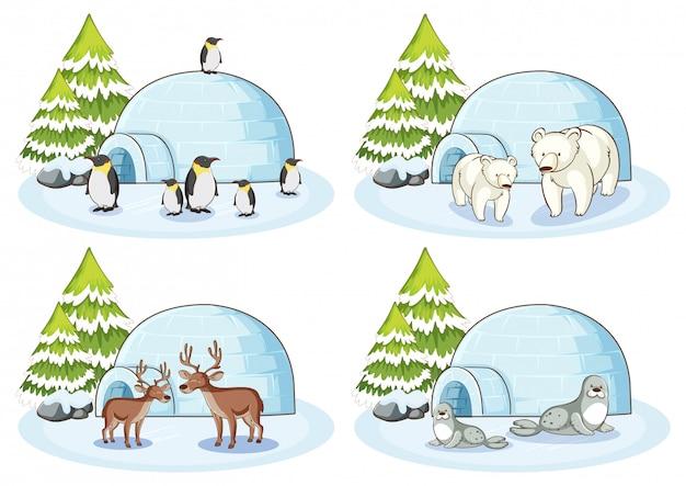 Vier winterse taferelen met verschillende dieren Gratis Vector