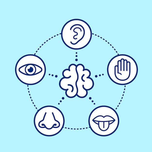 Vijf menselijke zintuigen rondom de hersenen. Premium Vector