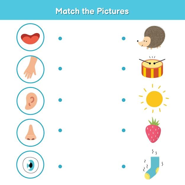 Vijf zintuigen matching game voor kinderen. zien, voelen, horen, ruiken en proeven. overeenkomen met de activiteitenpagina van de afbeeldingen. materiaal voor lichaamsdelen leren voor de kleuterschool. werkboek voor kinderen. vector illustratie Premium Vector