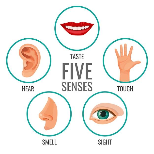 Vijf zintuigen van menselijke perceptie poster pictogrammen. proef en hoor, voel en ruik, zie menselijke gevoelens. lichaamsdelen in cirkels Premium Vector