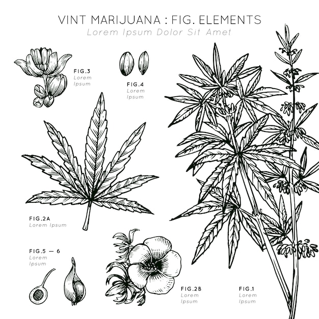 Vint marihuana elementen planten hand getrokken Gratis Vector