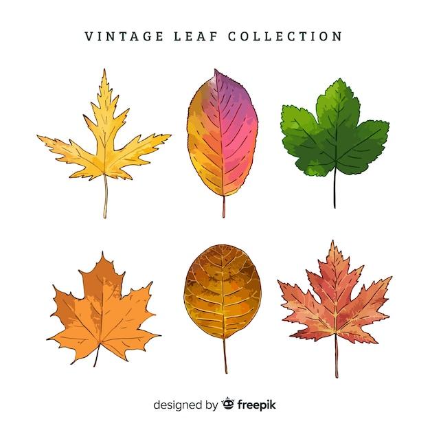 Vintage botanische bladcollectie Gratis Vector