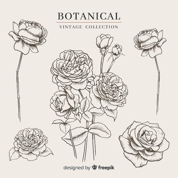 Vintage botanische bloemencollectie Gratis Vector