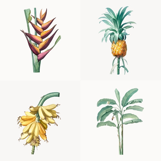 Vintage illustratie van set van tropische plant Gratis Vector