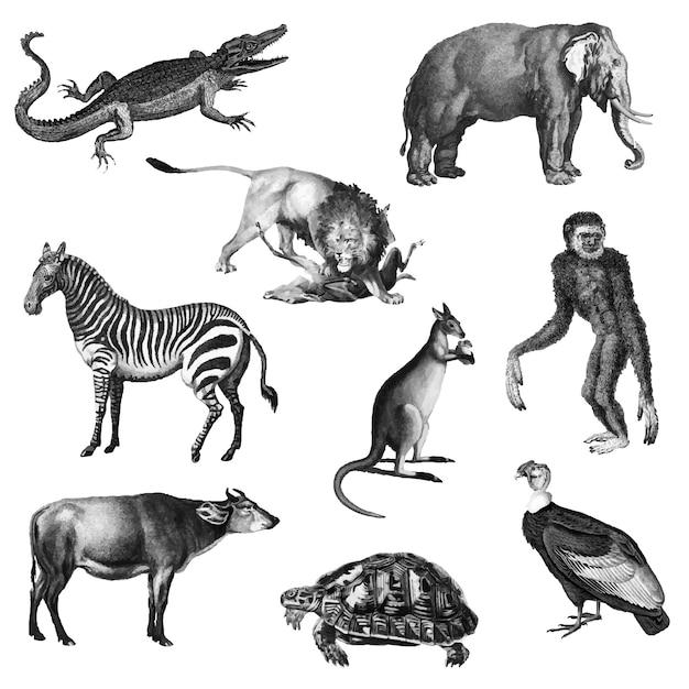Vintage illustraties van dieren Gratis Vector