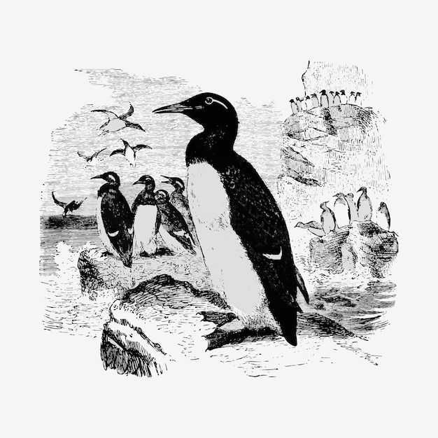Vintage pinguïns illustratie Gratis Vector