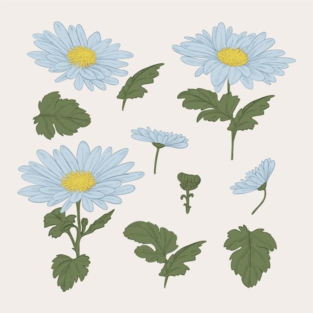 Vintage plantkunde blauwe bloemencollectie Gratis Vector