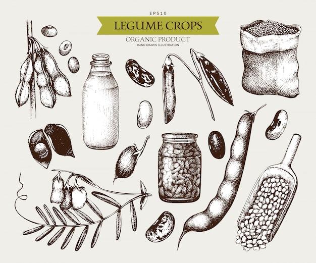 Vintage set van peulvruchten planten en boerderijproducten in vintage stijl Premium Vector