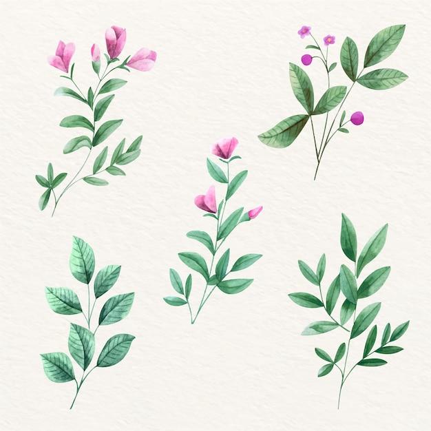 Violette mooie bloemen en bladeren Gratis Vector