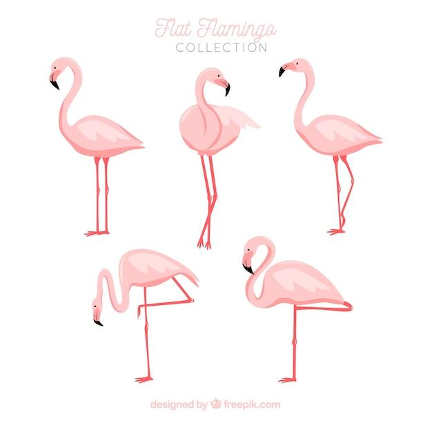 Vlakke flamingo'sinzameling in verschillende stellen Gratis Vector