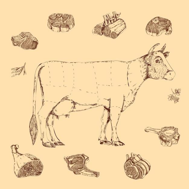 Vlees handgetekende regeling van het slachten van rundvlees met belettering van koe en kruiden op beige Gratis Vector