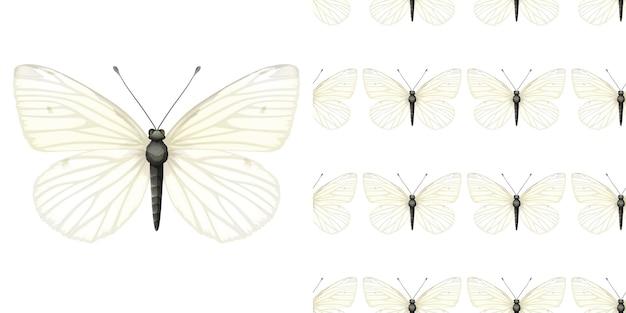 Vlinderinsect en naadloze achtergrond Gratis Vector
