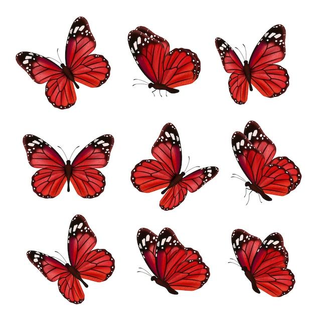 Vlinders collectie. prachtige natuur gekleurde vliegende insecten siervleugels mot realistische vlinder. gekleurde insectenmot vliegen, natuurlijke vlieg illustratie Premium Vector