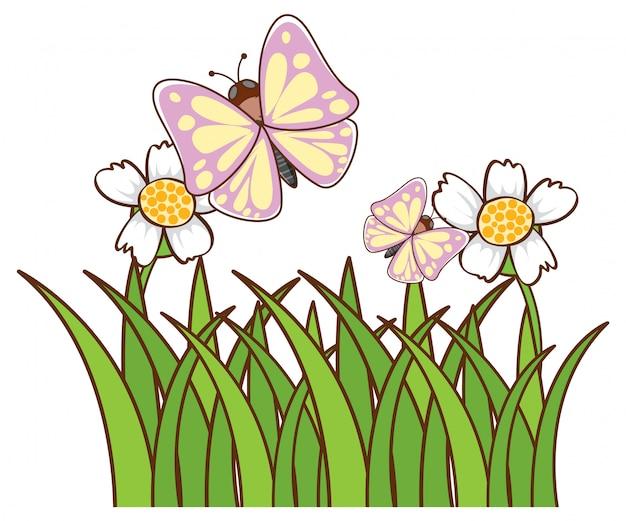 Vlinders in tuin op wit Gratis Vector