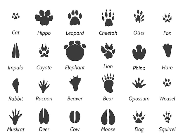 Voetafdrukken van dieren in het wild Premium Vector