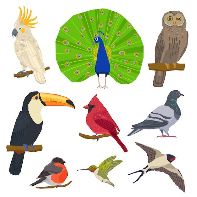 Vogel getrokken pictogrammenset Gratis Vector