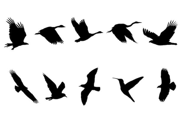 Vogel met zwarte silhouetten Premium Vector