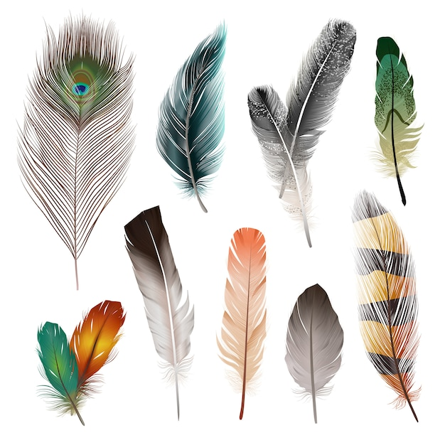 Vogel realistische veren set Gratis Vector