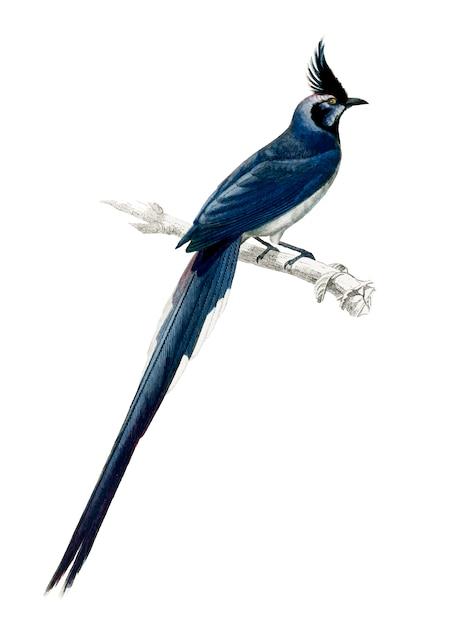 Vogel Gratis Vector