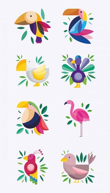 Vogels exotisch tropisch gebladerte groen natuur fauna flora Premium Vector