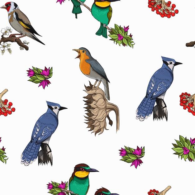 Vogels soorten patroon heldere kleurrijke sjabloon vector Premium Vector