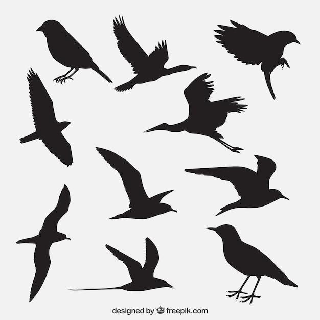 Vogelsilhouetten pakken Gratis Vector