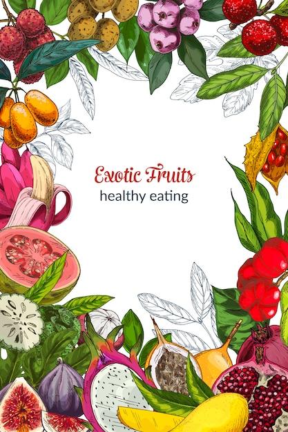 Volledig exotisch fruit, decoratief kader. hand getrokken vectorillustratie. Premium Vector