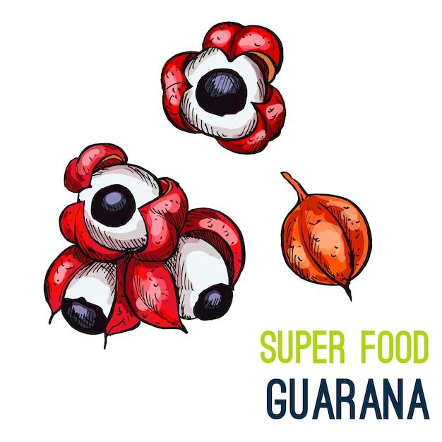 Volledige kleur super voedsel hand getrokken schets Premium Vector