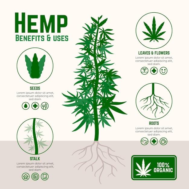 Voordelen van cannabis hennep infographic Premium Vector