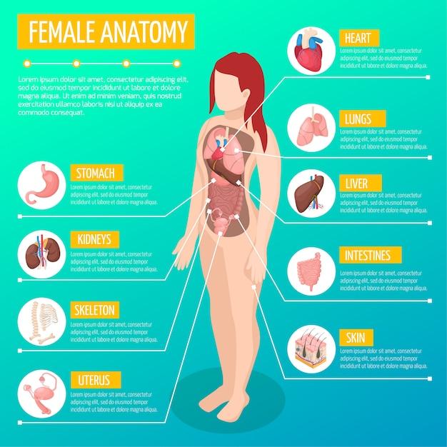 Vrouw anatomie infographic lay-out met locatie en definities van inwendige organen in isometrisch vrouwelijk lichaam Gratis Vector