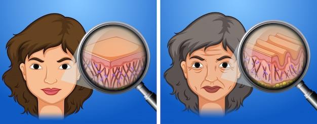 Vrouwelijke jongere huid en ouder wordende huid Gratis Vector