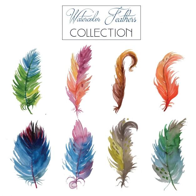 Watercolour feather collection Gratis Vector