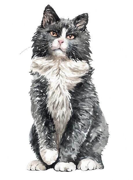 Waterverf noorse boskatzitting. verf aquarel kat. Premium Vector