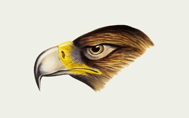 Wedge-de steel verwijderde van eagle-illustratie Gratis Vector