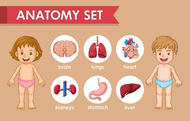 Wetenschappelijke medische infographic van kinderen menselijke anatomie Gratis Vector