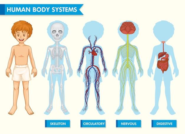 Wetenschappelijke medische infographic van menselijk lichaamssystemen Gratis Vector