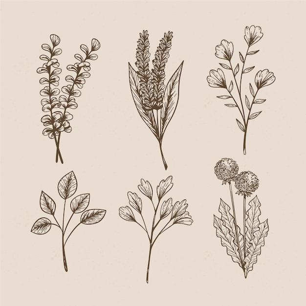 Wilde bloemen in vintage stijl voor botanische studies Gratis Vector