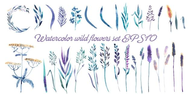 Wilde bloemen, kruiden set Premium Vector