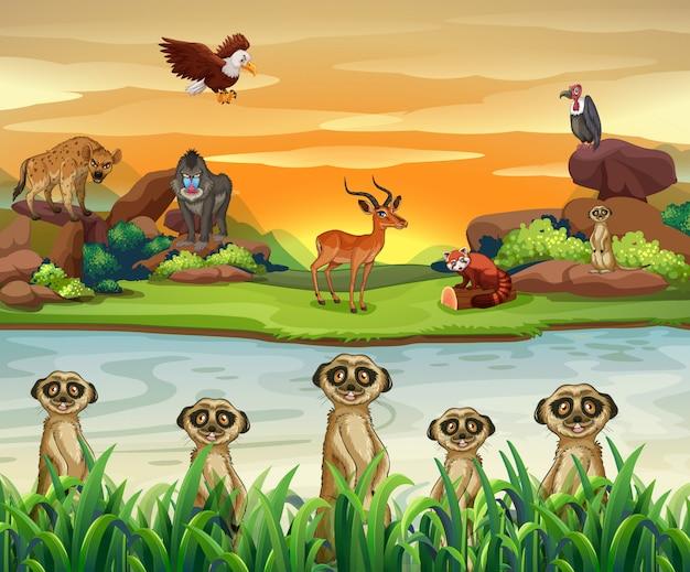 Wilde dieren bij de rivier Premium Vector