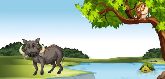 Wilde dieren bij de vijver Gratis Vector