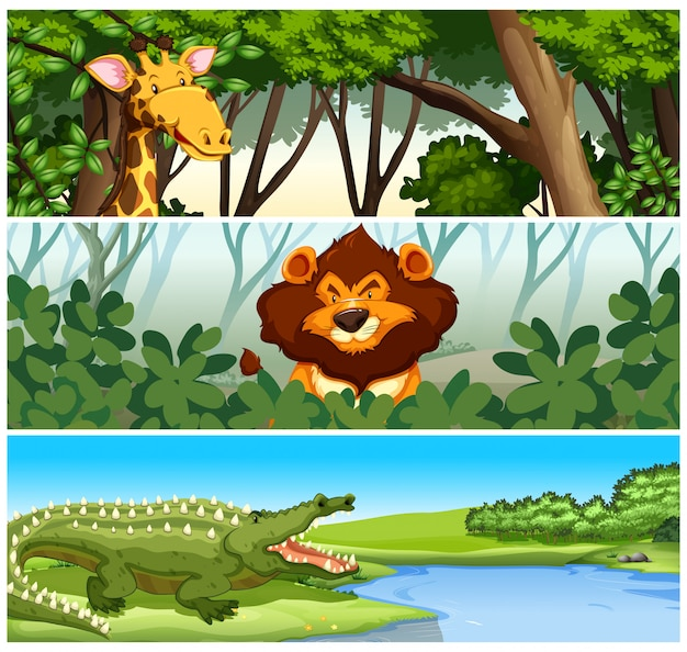 Wilde dieren in het bos Gratis Vector