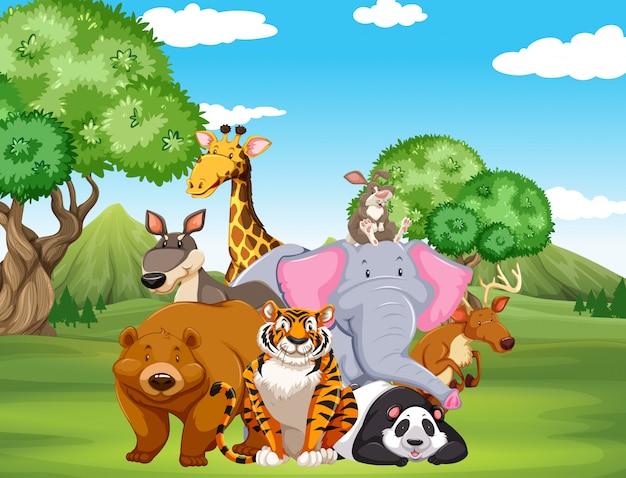 Wilde dieren op het veld Gratis Vector