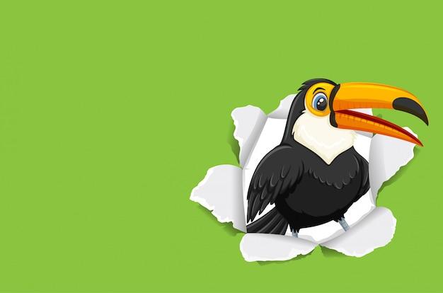 Wilde toekanvogel Premium Vector